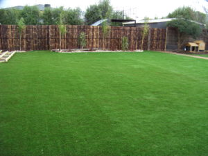 Lawn 12_andy man