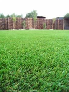 Lawn 13_andy man