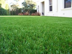 Lawn 6_andy man