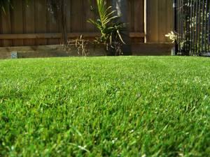 Lawn 4_andy man