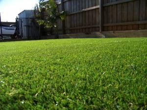 Lawn 5_andy man